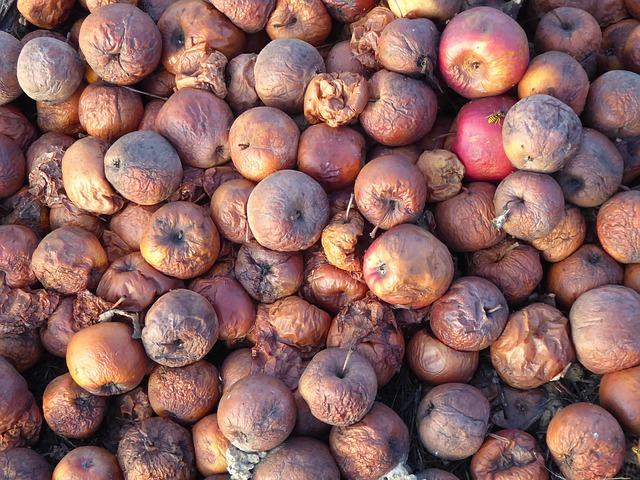 [בתמונה: התפוחים הרקובים... תמונה חופשית שעוצבה והועלתה על ידי John-Silver לאתר Pixabay]