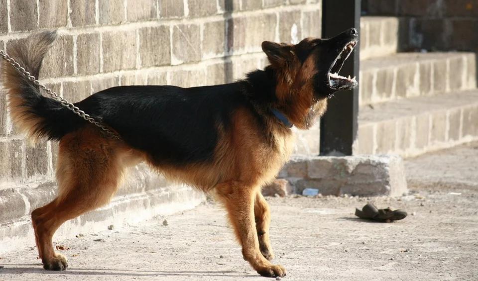 [בתמונה: 'הכלבים הנובחים' לפחות להלכה, של הדמוקרטיה הישראלית: כלי התקשורת - הם לא נבחו הפעם... תמונה חופשית שעוצבה והועלתה על ידי PDPics לאתר Pixabay]