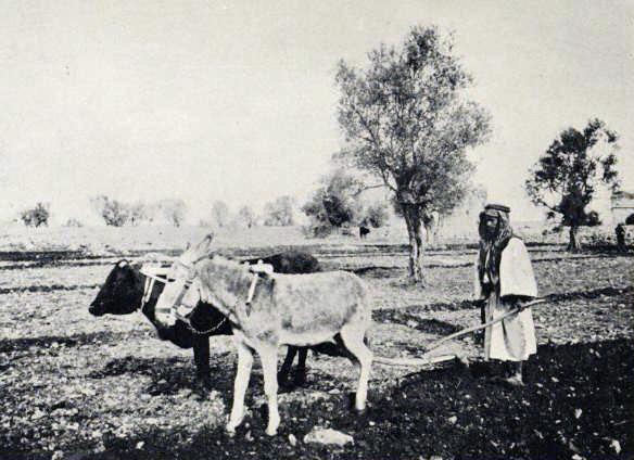 """[בתמונה: חריש בשנת 1913 עם """"מחרשה ערבית"""" בעלת יתד אחת. התמונה היא נחלת הכלל]"""